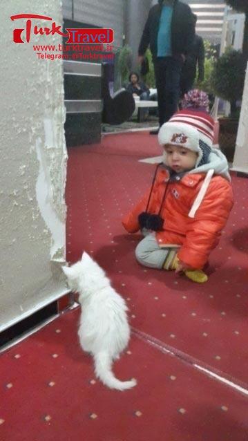 خرید گربه وان